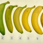 banana-Anytech Tune